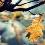 fallilng leaf