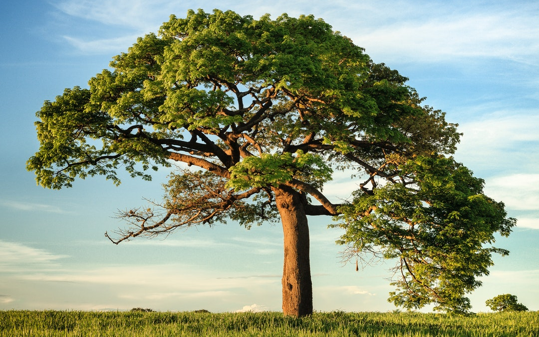 Are You Well Rooted? (New Post at The Glorious Table)